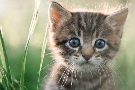 howto stop cats pooping in garden uk